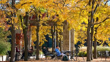 Students sit in a pavilion surrounded by yellow fall foliage